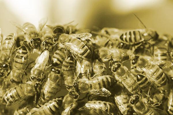 Historia de las abejas, Maja Lunde