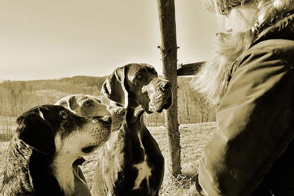 Reseña de Los Perros Duros No Bailan, de Arturo Pérez-Reverte post image
