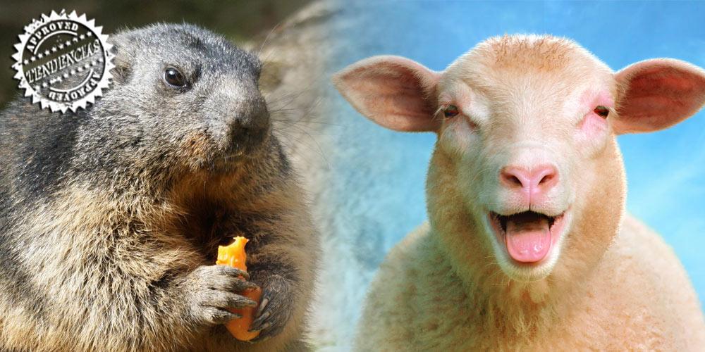 ¿Y por qué hay marmota y no borreguetes? post image