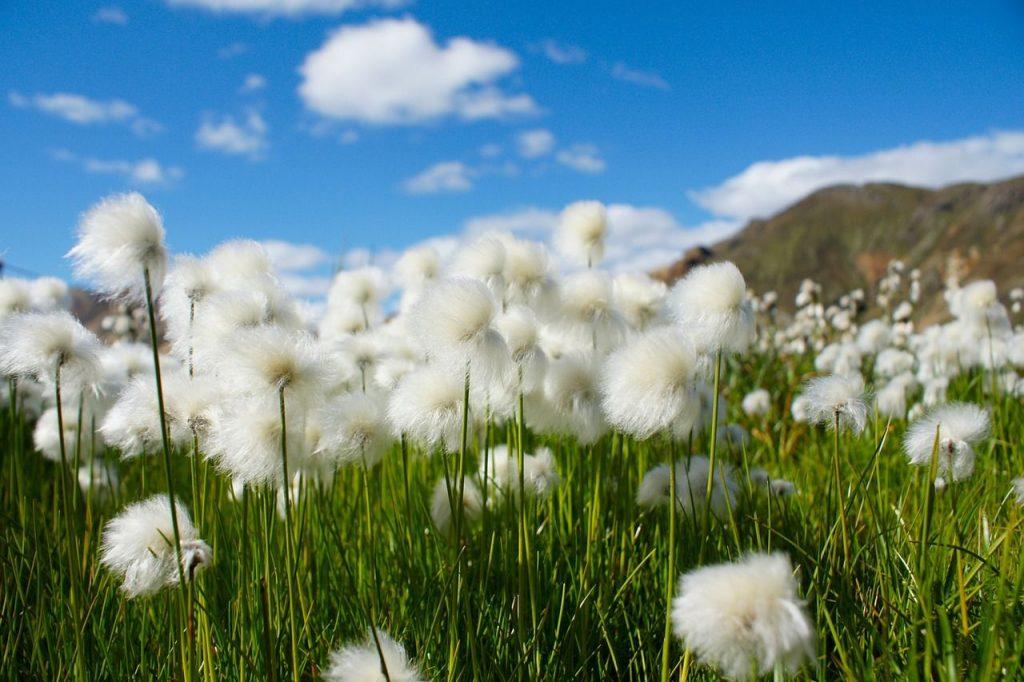 7 razones por las que comprar ropa ecológica