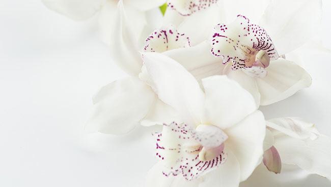 'Orquídeas para Perséfone' de Nieves Guijarro Briones post image