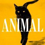 'Animal', de Leticia Sierra